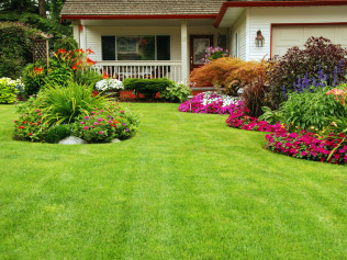 Lawn Services & Maintenance